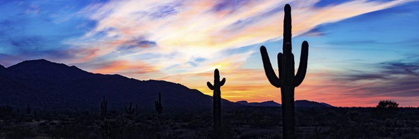 Silhouttes of cacti at sunset outside Phoenix Arizona
